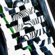 Zebracsíkok - változó képeslap