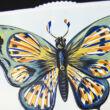 Kék pillangó - változó képeslap