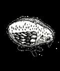 patikus lemez szemelyes vasarlas