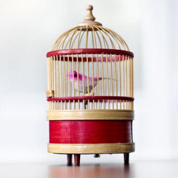 Csiripelő madár kalitkában