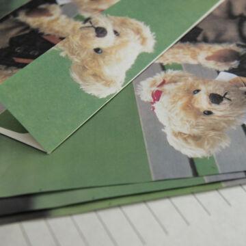 Macis levélpapír készet borítékkal