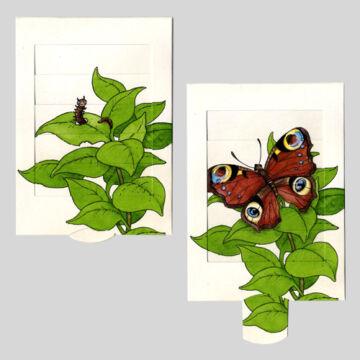 Pillangó születése  változó képeslap