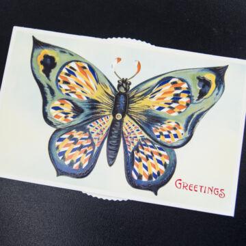 Kék pillangó  változó képeslap